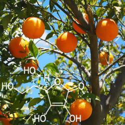 Arancio Vitamina C