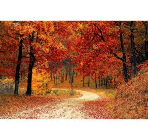 Dolori autunno Promin